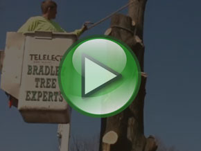 Bradley Tree Experts - On the Job Video